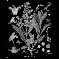 a vastagbelet méregtelenítő gyógynövények)